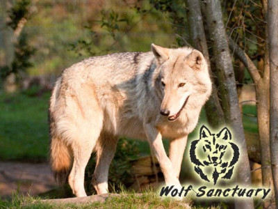The Wolf Sanctuary Plettenberg Bay