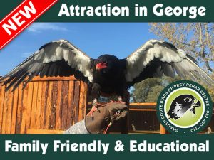 Great New Family Friendly Attraction in George