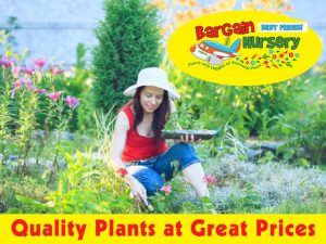 Plants at Great Prices in George