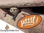 George Wildlife Park Adjusted Trading Hours
