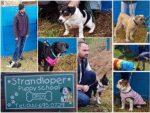 Strandloper Puppy School Hartenbos